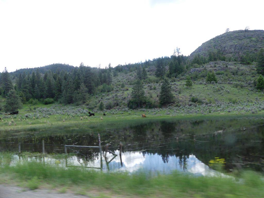 il y a aussi de superbes lacs et des petites zones d'herbe