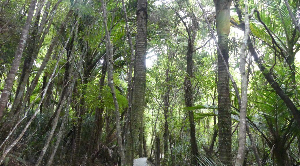 truman track : la forêt des lutins
