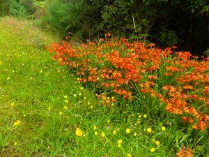 Fleurs de l'île du Sud