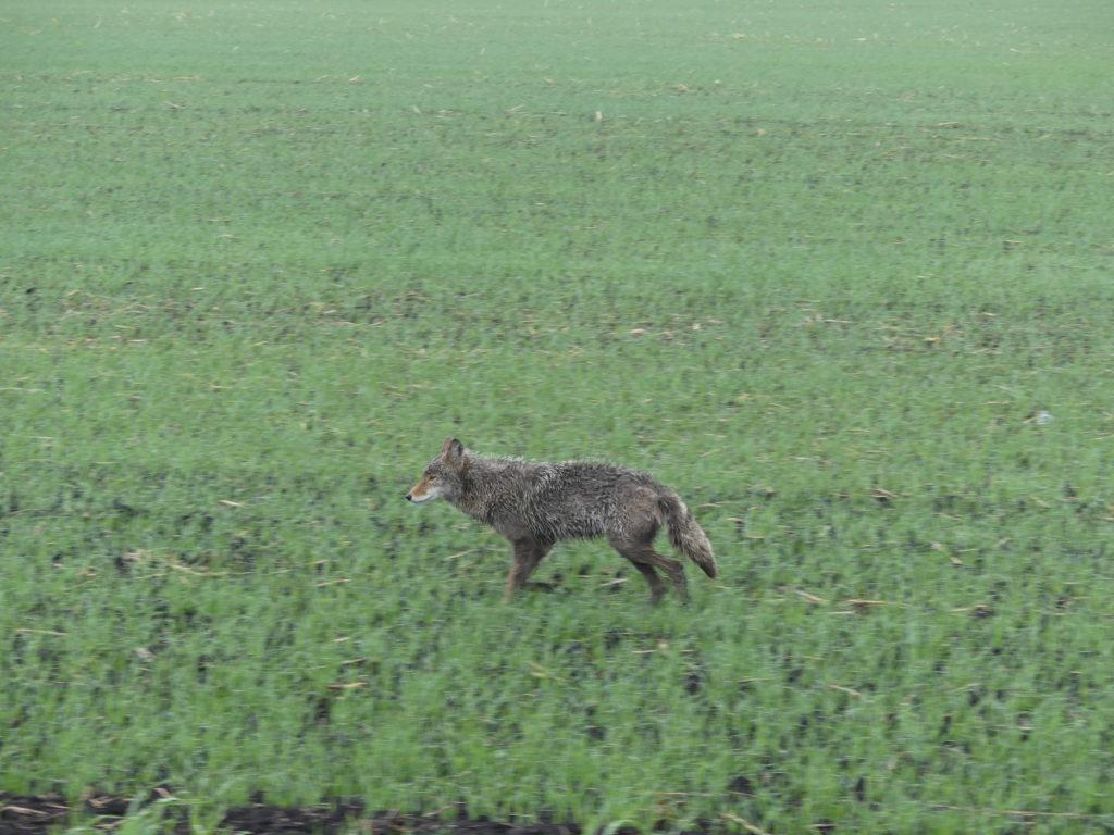il y a des animaux dans les prairies
