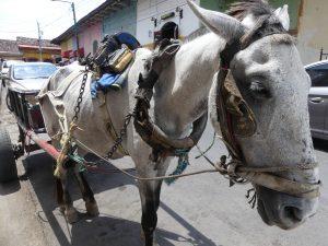il y a beaucoup de charrettes à cheval ici