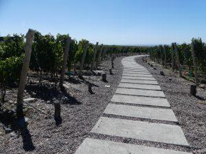 visite exclusive de Bodegas dans la vallée d'Uro