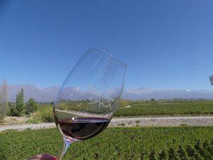 non seulement le vin est bon, mais la vue est belle !