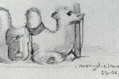 Eve : le chameau du mini Gobi