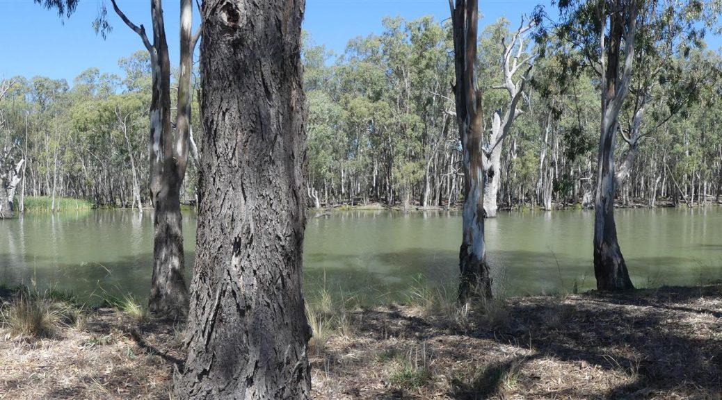 le bayou australien