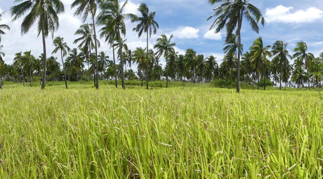forêt tropicale de Tonga