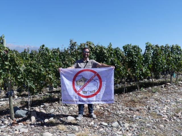 10Torsions dans les vignobles d'Argentine